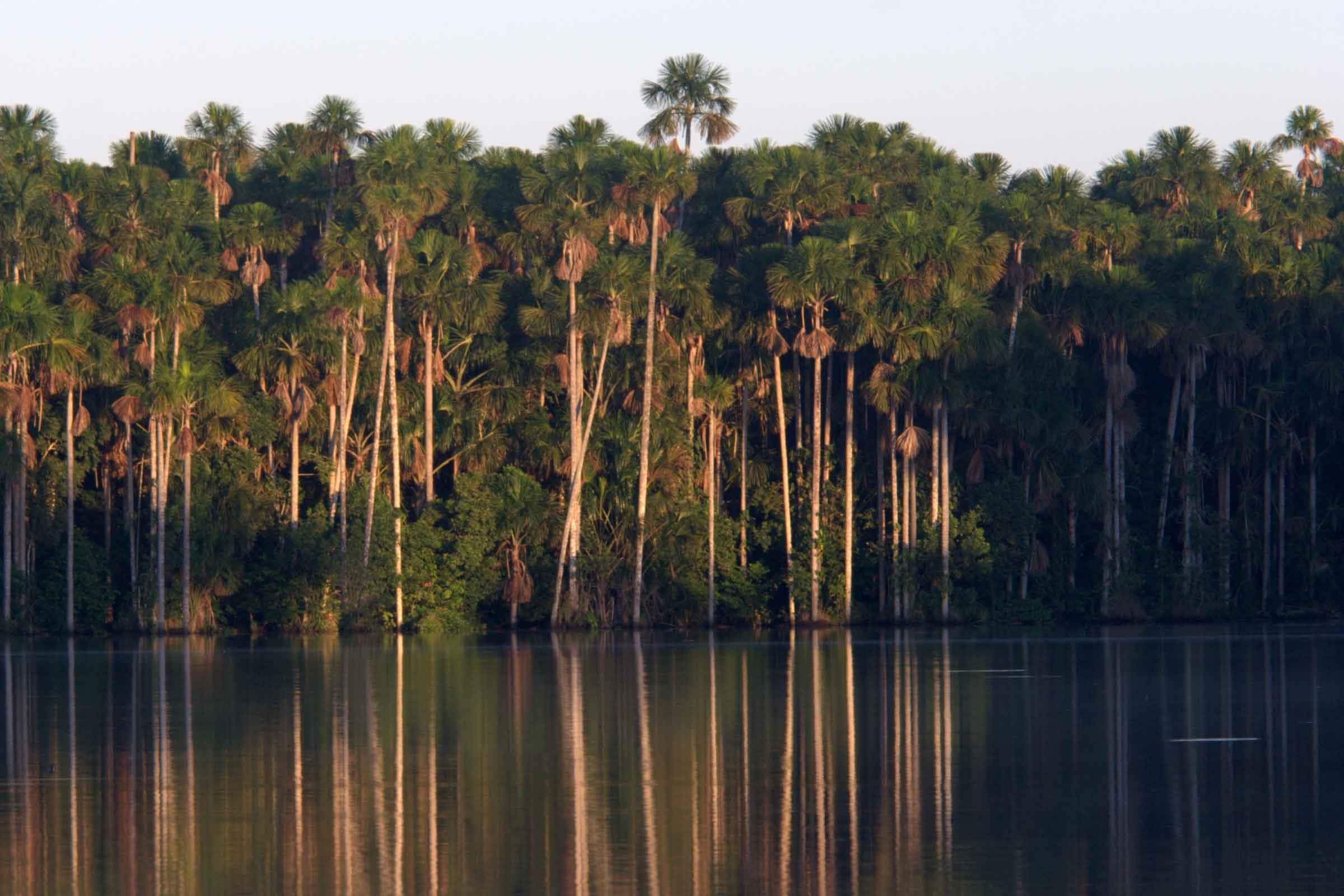 Tambopata sandoval Lake (1)