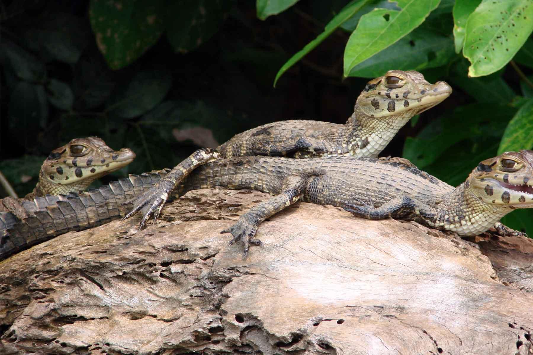 Upper Tambopata Chuncho Macaw Clay Lick and Sandoval Lake 5 Days (10)