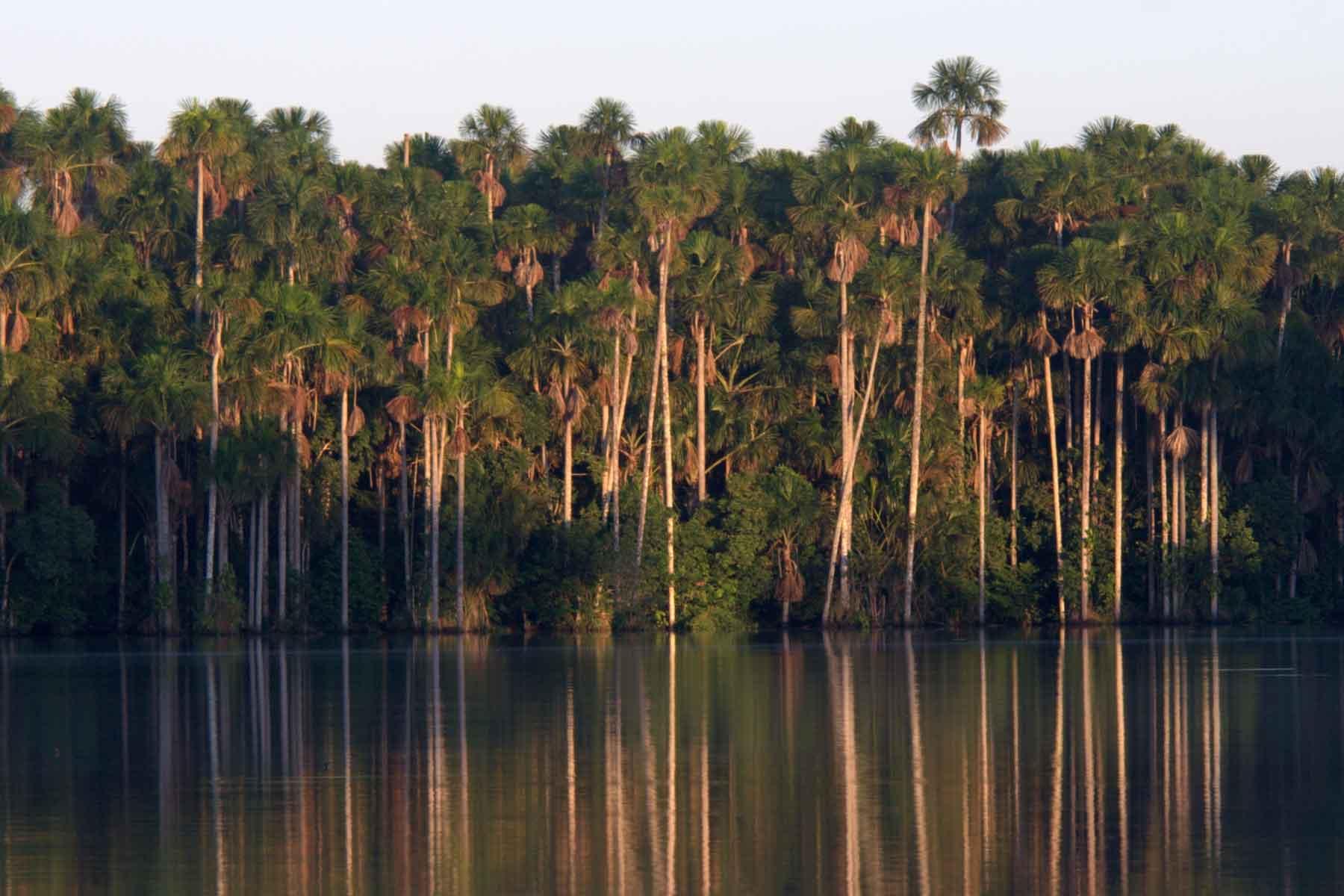 Upper Tambopata Chuncho Macaw Clay Lick and Sandoval Lake 5 Days (12)