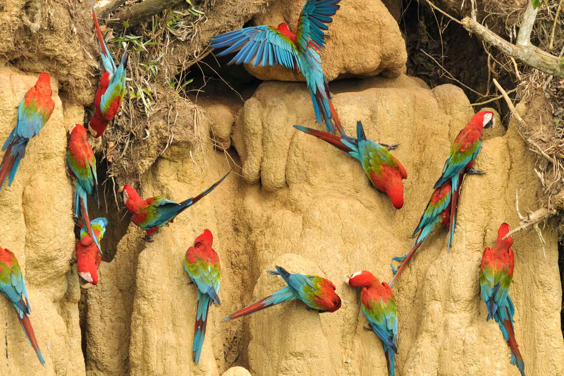 Upper Tambopata Chuncho Macaw Clay Lick and Sandoval Lake 5 Days (9)